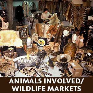 wildlifemarkets