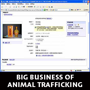 big-business-of-animal-trafficking