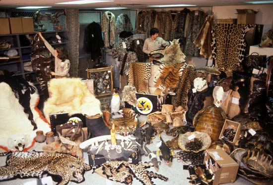 Confiscated Skins and Wildlife at JFK Int'l Airport
