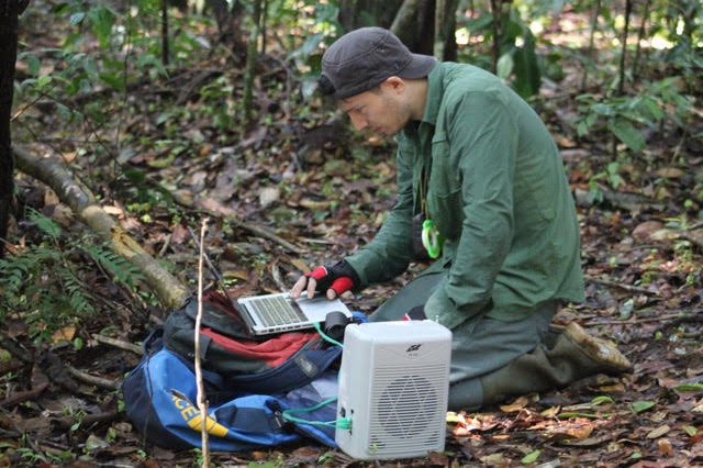 Researcher James Askew in the field collecting orangutan vocalizations. Image courtesy of James Askew.