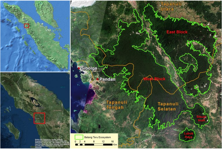 Map of the Batang Toru ecosystem, home to the Tapanuli orangutan (Pongo tapanuliensis) in Sumatra.